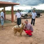 Toco brinca com os cachorros de um dos trabalhadores da fazenda