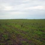 Terreno preparado para o plantio